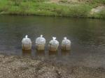 Сто тысяч мальков хариуса – в воды Яракутаю