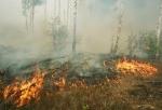 Лесные пожары не возникают сами по себе
