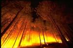 Правила действий по предупреждению лесных (торфяных) пожаров