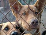 Республиканская прокуратура продлила жизнь бездомным собакам Усинска