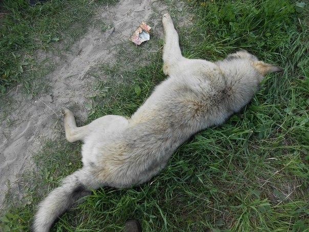 Беспрецендентный отстрел собак в городе (внимание - фотоматериал +18)