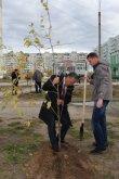 100 саженцев осины, берёзы и сосны были посажены на молодёжной аллее Усинска