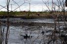 За разлив нефти на реке Колве в Усинском районе ответит экс-директор филиала «РусьВьетПетро»