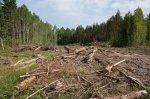 Полицией Коми возбуждено уголовное дело по факту незаконной рубки ценных пород леса